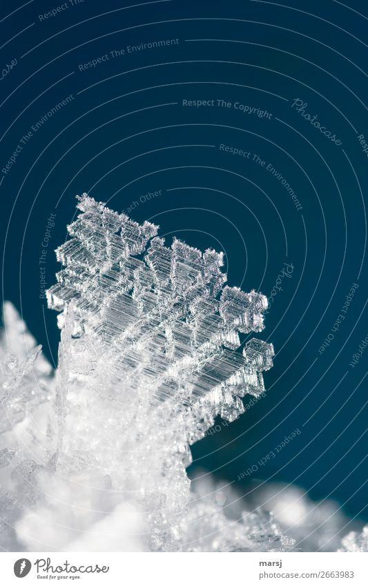 Eiskristall Winter Frost außergewöhnlich kalt klein Kraft bizarr einzigartig elegant Natur Kristallstrukturen gefroren Farbfoto Gedeckte Farben Außenaufnahme