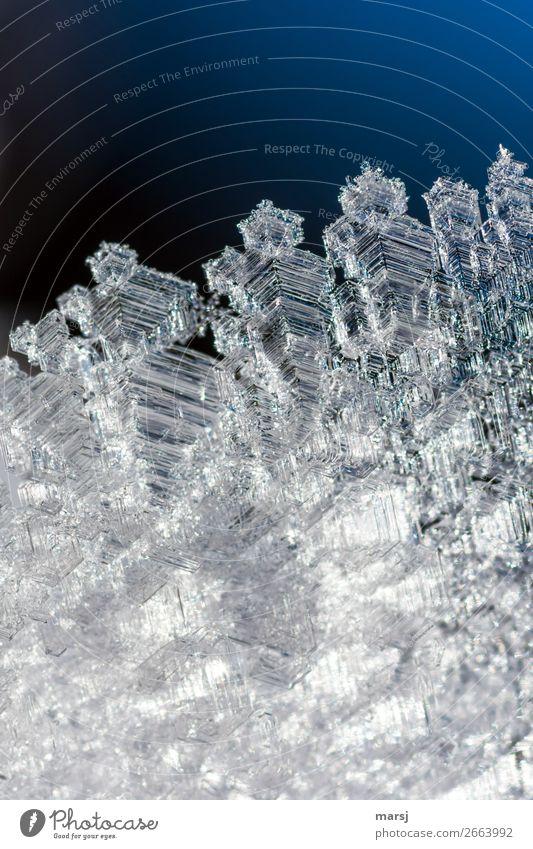 Breit gefächert Leben Winter Eis Frost Eiskristall Kristallstrukturen glänzend leuchten ästhetisch außergewöhnlich dünn authentisch elegant fantastisch
