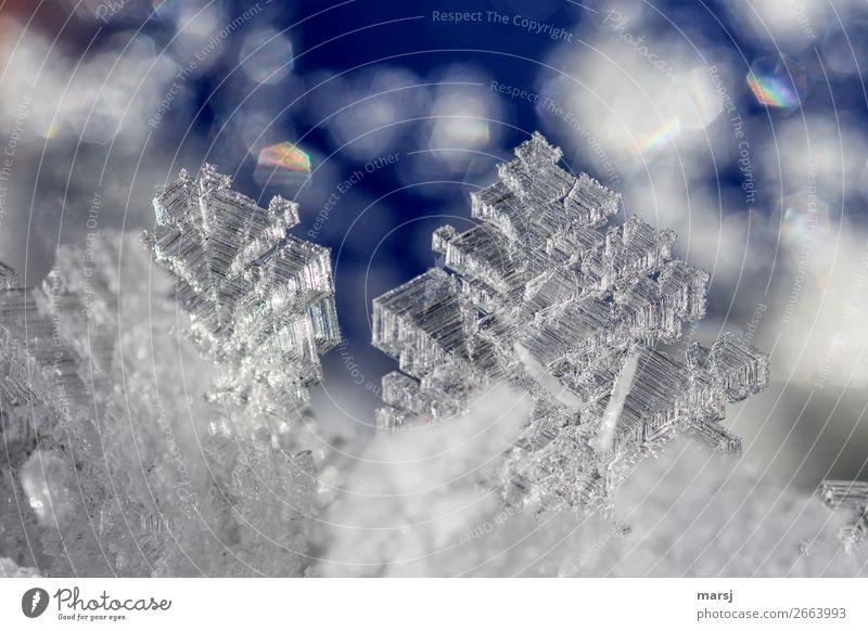Eiskristalle Natur Winter Frost Kristalle glänzend leuchten ästhetisch außergewöhnlich dünn authentisch eckig fantastisch kalt blau Erfolg Kraft Reinheit