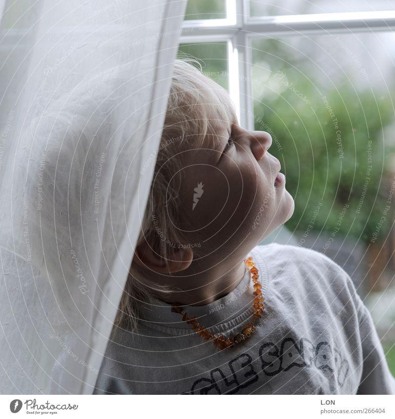 skeptisch Mensch Kind weiß Fenster Denken träumen Stimmung Wohnung Kindheit blond natürlich maskulin niedlich T-Shirt beobachten Neugier
