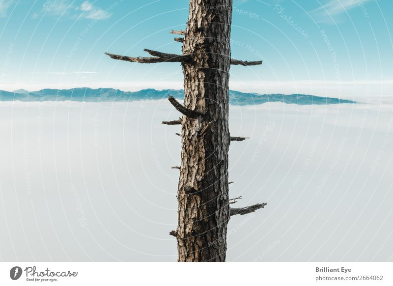entkleidet Ferien & Urlaub & Reisen Winter Natur Herbst Klima Nebel Baum Berge u. Gebirge alt Unendlichkeit natürlich Sauberkeit stachelig braun ruhig Reinheit