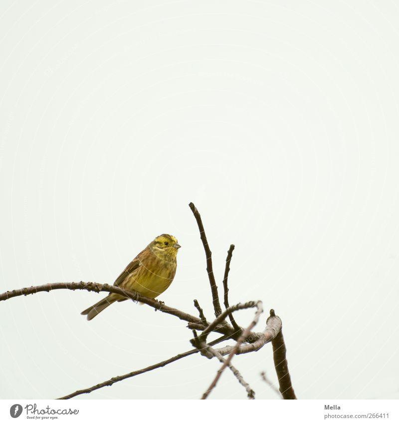 Good Morning, Friday Himmel Natur Baum Pflanze Tier gelb Umwelt Freiheit grau klein hell Vogel sitzen natürlich frei niedlich
