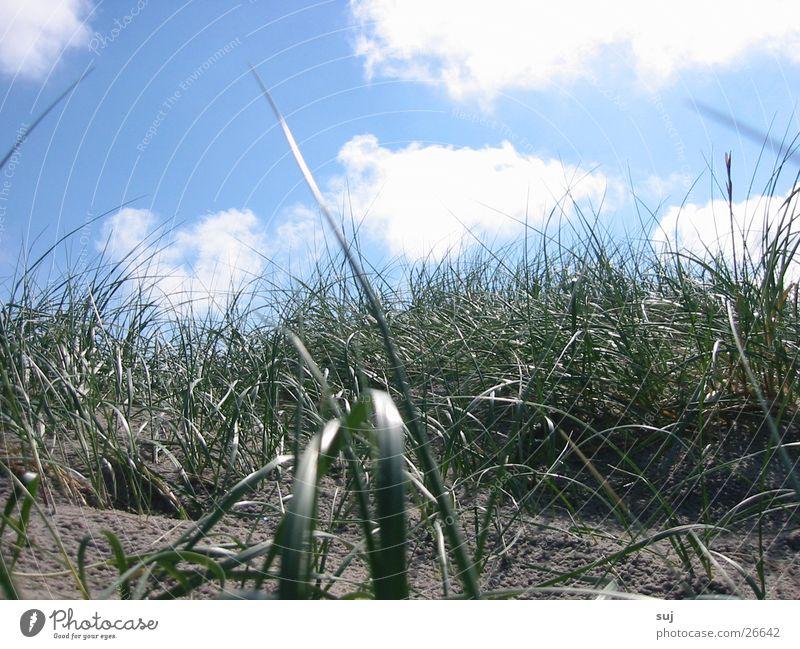 Dünengras Gras Wolken Strand Europa Stranddüne Sand Nordsee