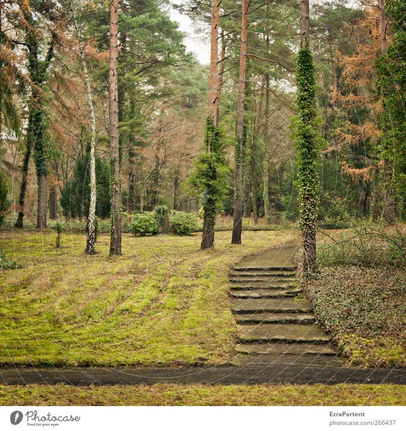 WaldWeg Umwelt Natur Landschaft Pflanze Erde Herbst Baum Gras Efeu Wiese braun gelb grau grün Rasen Wege & Pfade Fußweg Linie Quadrat Birke Kiefer Farbfoto