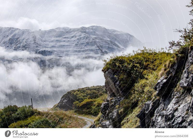 Jahreszeitengrenze Schnee Berge u. Gebirge wandern Landschaft Wolken Herbst Wetter Nebel Moos Felsen Alpen Berg Arlberg Schneebedeckte Gipfel Bergwiese