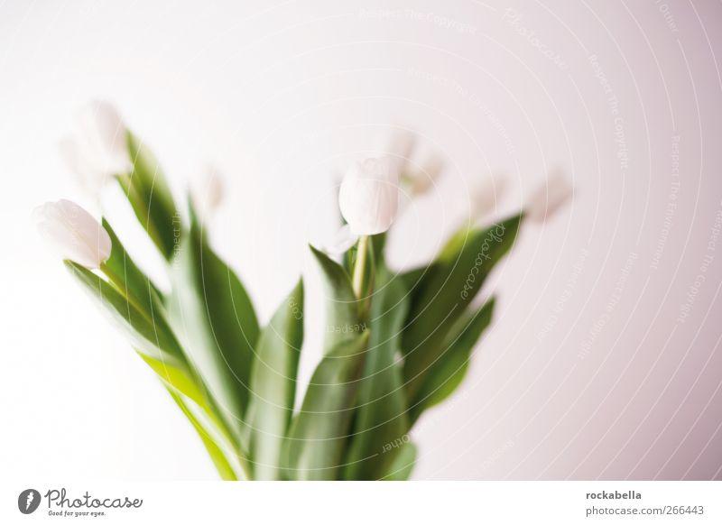 frühling. weiß grün elegant ästhetisch Fröhlichkeit Blumenstrauß Lebensfreude Duft Tulpe Leichtigkeit Optimismus Frühlingsgefühle