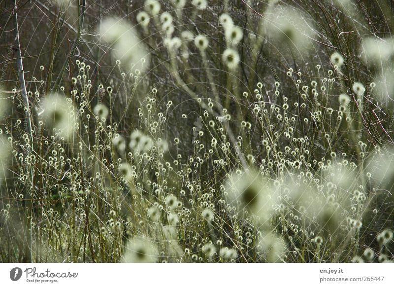 Leuchtkugeln Natur grün Pflanze Gefühle Stimmung wild Sträucher Kugel chaotisch bizarr Leichtigkeit Inspiration Botanik stachelig Blütenblatt Frühlingsgefühle