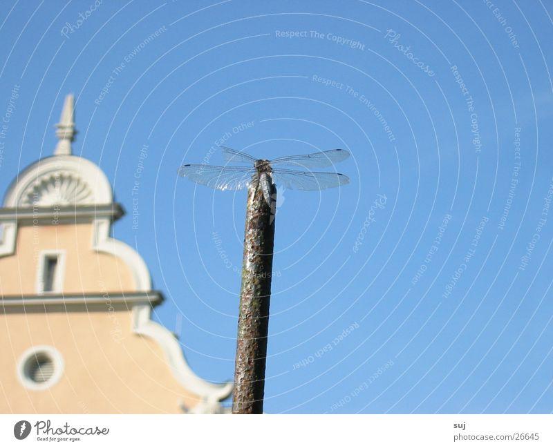 Libell' Libelle Flügel abgebrochen Himmel blau