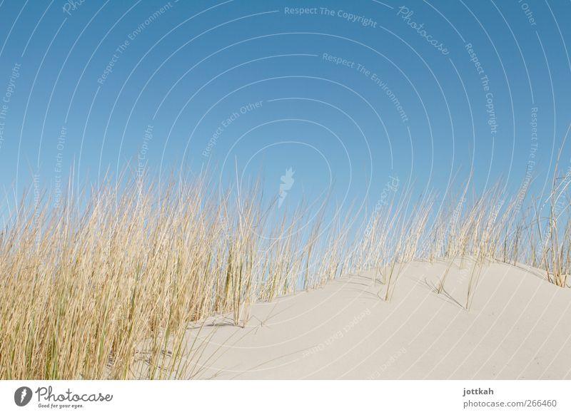 2/3 Himmel, 1/3 Düne Natur blau Ferien & Urlaub & Reisen Sonne Meer Sommer Strand ruhig Erholung Wärme Sand Deutschland Insel leer Sauberkeit