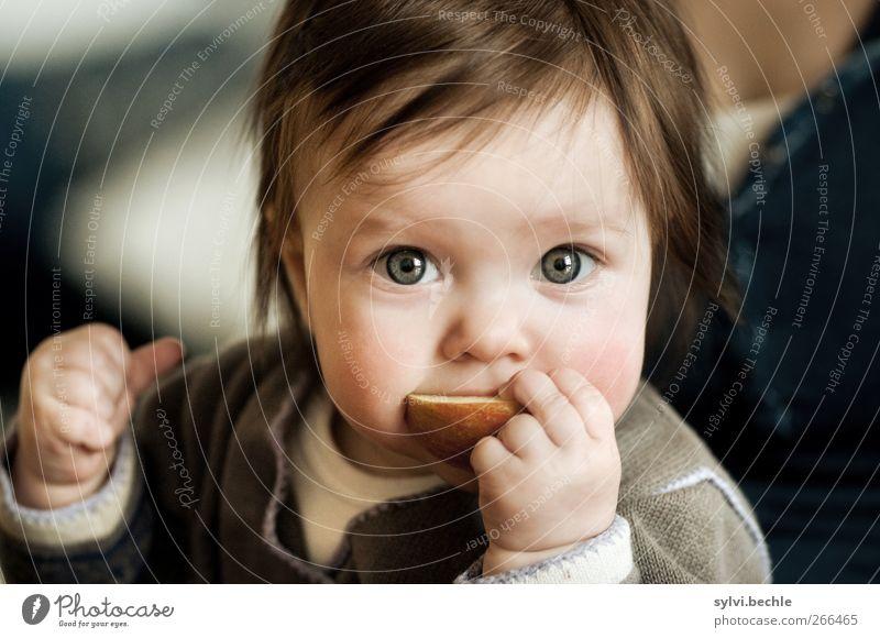 der erste Apfel Mensch Kind Mädchen Ernährung feminin Leben Lebensmittel Essen Gesundheit Kindheit Frucht Baby niedlich Neugier Apfel festhalten