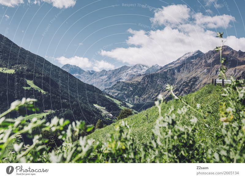 Südtiroler Alpen | Transalp wandern Klettern Bergsteigen Natur Landschaft Himmel Wolken Sonne Sommer Schönes Wetter Blume Wiese Berge u. Gebirge Unendlichkeit