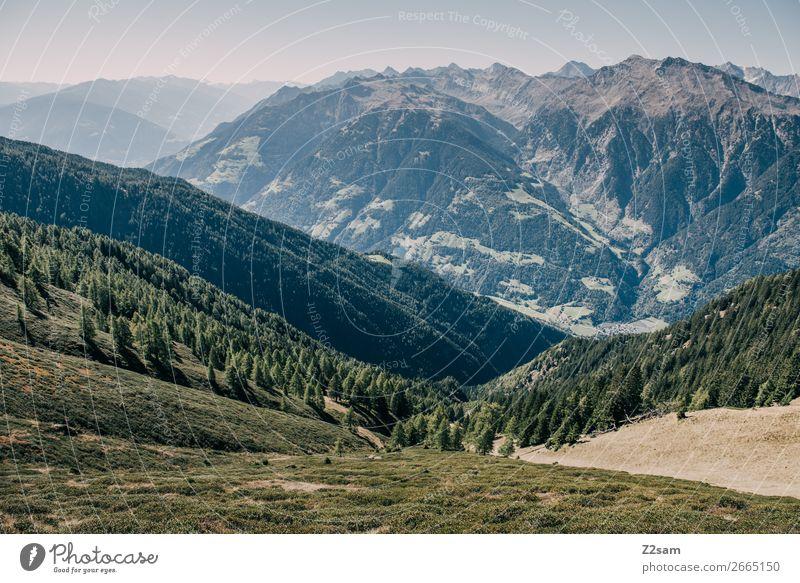 Bergpanorama Südtirol wandern Klettern Bergsteigen Umwelt Natur Landschaft Wolkenloser Himmel Sommer Schönes Wetter Wald Alpen Berge u. Gebirge Gipfel