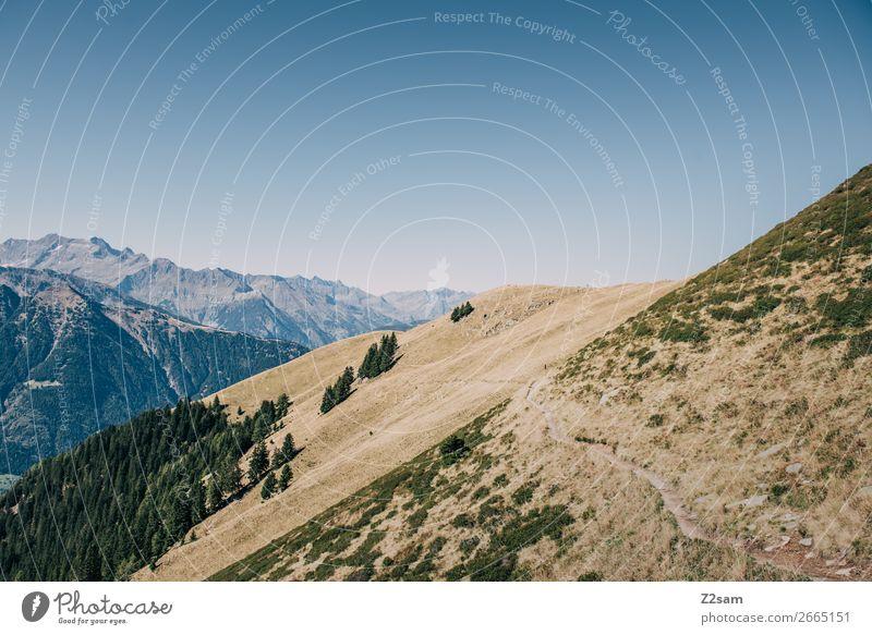 Hirzer in Südtirol wandern Umwelt Natur Landschaft Wolkenloser Himmel Sonne Sommer Schönes Wetter Wiese Alpen Berge u. Gebirge Gipfel Unendlichkeit hoch