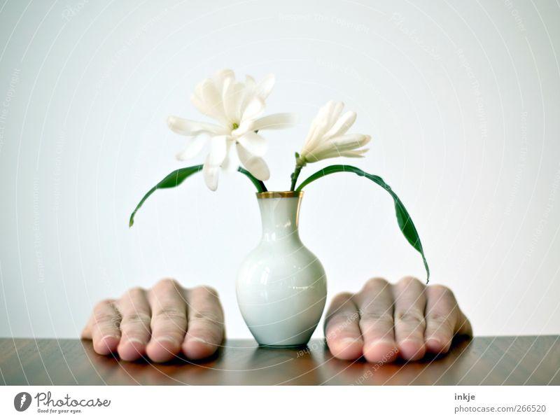Magnolien für Mutti Mensch Hand Blume klein gold Finger stehen Romantik unten Blumenstrauß Dienstleistungsgewerbe Vase bescheiden Muttertag Magnoliengewächse