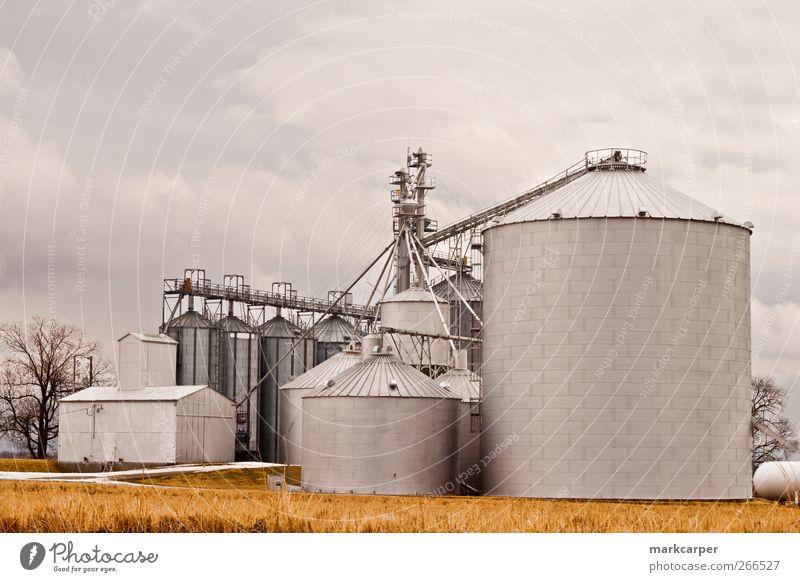 Silos auf dem Bauernhof gegen den bedeckten Himmel schön Arbeit & Erwerbstätigkeit Landschaft Wolken Herbst Beton Stahl außergewöhnlich groß gold Luzerne