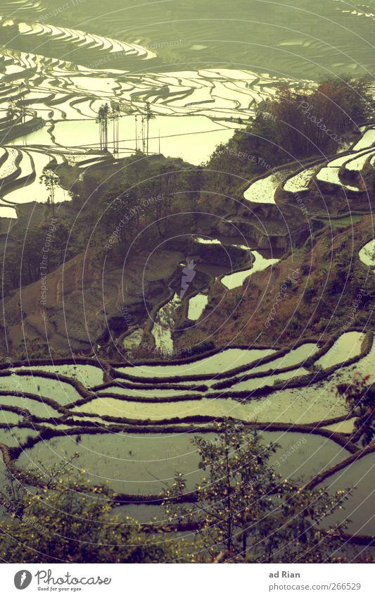 Seen Natur Wasser Baum Landschaft Stimmung Erde Treppe Hügel China Ackerbau Symmetrie Reisfeld Yunnan