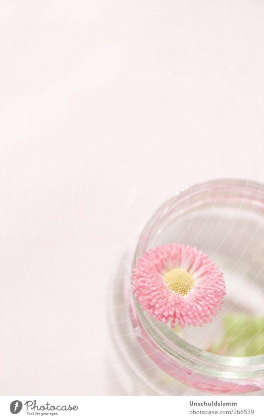 Soft Skills Natur Pflanze schön Sommer Blume Liebe Blüte Frühling hell rosa Dekoration & Verzierung Geburtstag ästhetisch Blühend Lebensfreude Romantik