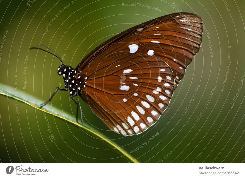 Schmetterling Natur grün schön Tier Umwelt Erde braun Wildtier sitzen natürlich Flügel Idylle festhalten Insekt Umweltschutz