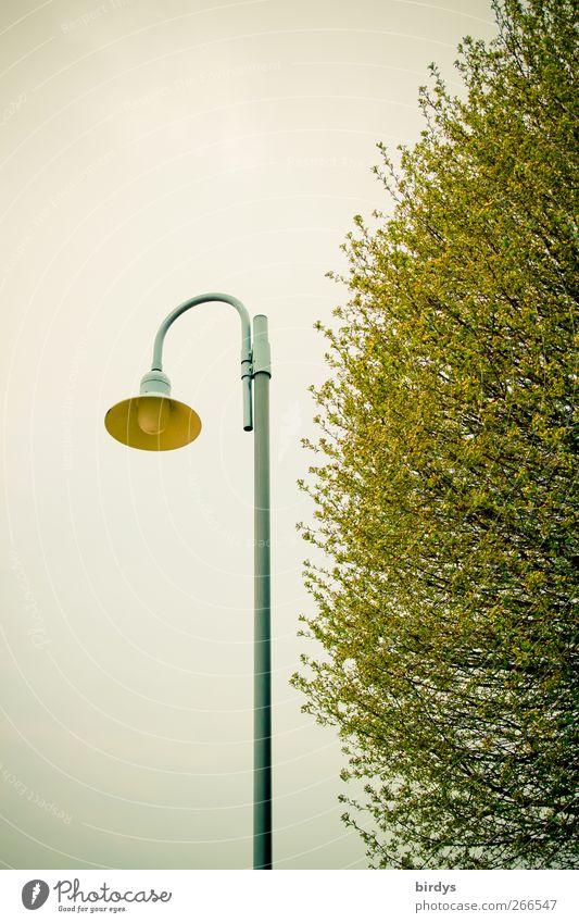 zartgrünes Leuchten Baum Blatt Frühling grau Lampe authentisch Ast Straßenbeleuchtung Anschnitt gekrümmt