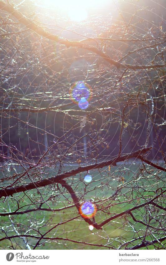 Frühlingsfest im Wald Natur Baum Umwelt Landschaft Freiheit hell Stimmung Feld Beginn ästhetisch Fröhlichkeit leuchten Warmherzigkeit Lebensfreude