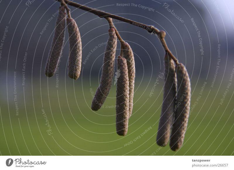 Früchte der Natur Natur Tiefenschärfe
