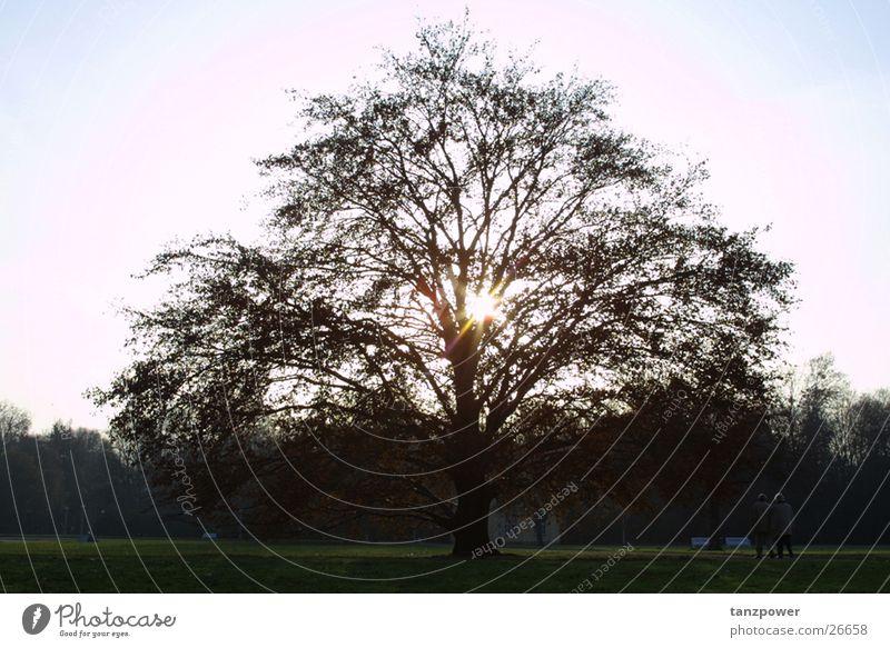 Erleuchtung Baum Sonne Erkenntnis