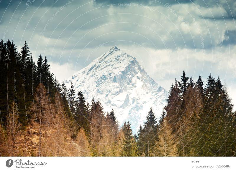 Bergzipfel Umwelt Natur Landschaft Urelemente Himmel Wolken Klima Schönes Wetter Wald Alpen Berge u. Gebirge Gipfel Schneebedeckte Gipfel außergewöhnlich eckig