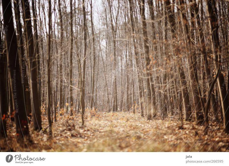 frühjahrswald Natur Baum Pflanze Wald Umwelt Landschaft Frühling braun natürlich Sträucher