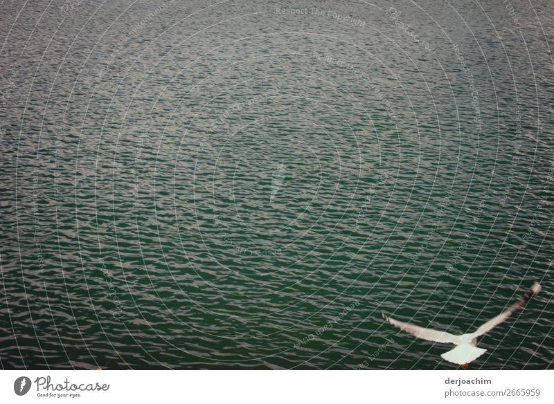 Im Gleitflug fliegt eine Möve im Aufwind über den Pacific.  Sie ist alleine auf dem Bild zu sehen. Ganz rechts unten. Sonst ist nur  Wasser zu sehen. Freude