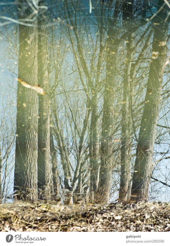 stille Wälder sind nass Natur blau Wasser Baum Pflanze Winter Wald Umwelt Landschaft Frühling träumen Stimmung braun skurril Surrealismus Täuschung