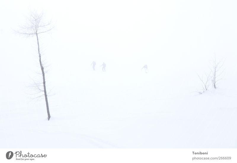 Whiteout Winter Schnee Mensch Natur Nebel Baum Einsamkeit Außenaufnahme Hintergrund neutral Totale High Key Schneelandschaft Schneedecke Unschärfe