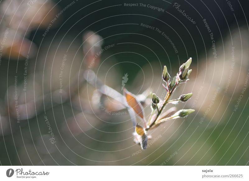 willkommen Natur Baum Pflanze Umwelt Leben Frühling Blüte Beginn Wachstum Blühend