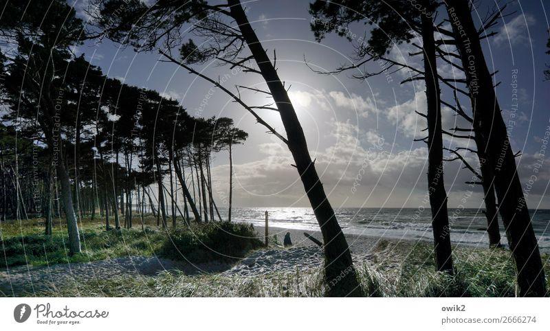 Krummholz Ausflug Ferne Umwelt Natur Landschaft Pflanze Wasser Himmel Wolken Horizont Schönes Wetter Baum Gras Sträucher Windflüchter Wald Küste Strand Ostsee