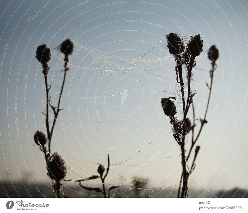 Hängematte Umwelt Natur Landschaft Pflanze Tier Wassertropfen Wolkenloser Himmel Horizont Schönes Wetter Sträucher Wildpflanze Distel Spinngewebe Spinnennetz