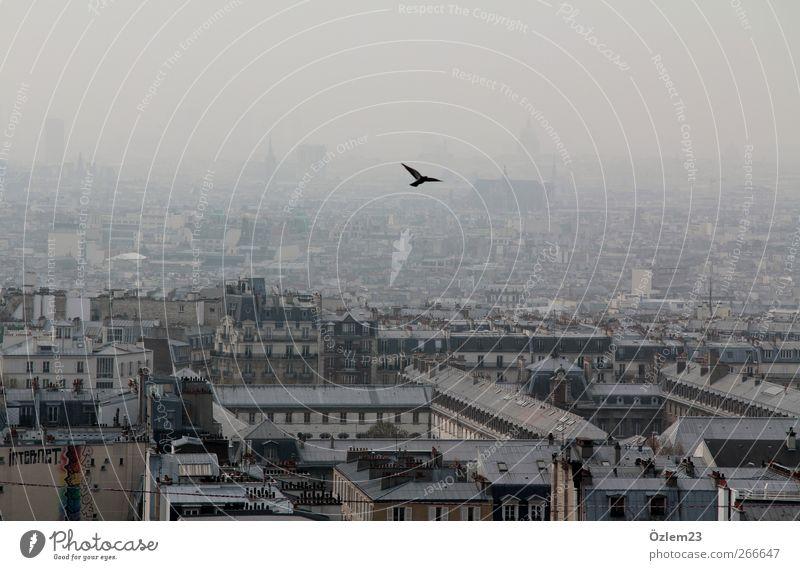fly Tier Haus Ferne Leben Luft Vogel Zufriedenheit fliegen Hauptstadt Wolkenloser Himmel schlechtes Wetter
