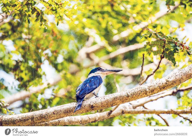 lieblingsvogel Ferien & Urlaub & Reisen Tourismus Ausflug Abenteuer Ferne Freiheit Natur Baum Garten Fluss Wildtier Vogel Tiergesicht Flügel Schnabel kingfisher