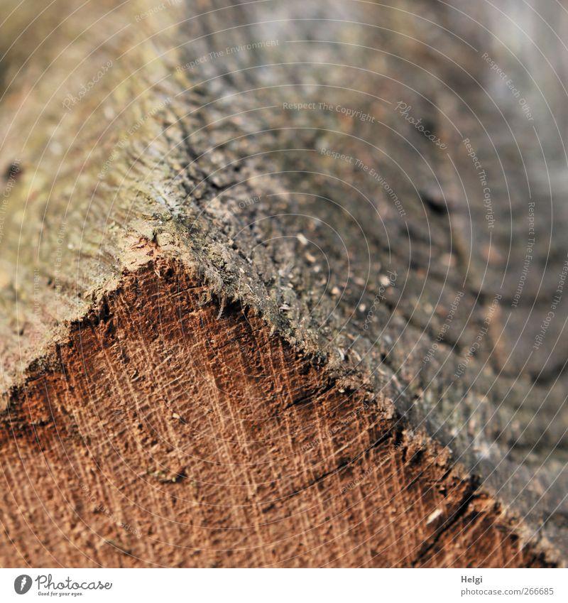 holzig... Umwelt Natur Holz liegen alt authentisch dreckig dunkel einfach trocken braun grau bizarr einzigartig Vergänglichkeit Kantholz Linie verrückt