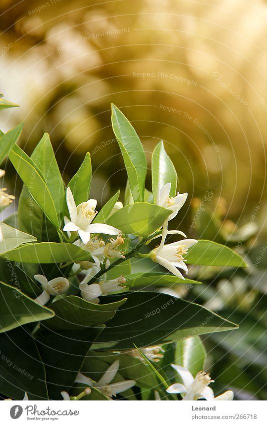 Natur weiß grün schön Baum Pflanze Blume Blatt Umwelt Frühling Blüte braun Gesundheit Orange natürlich frisch