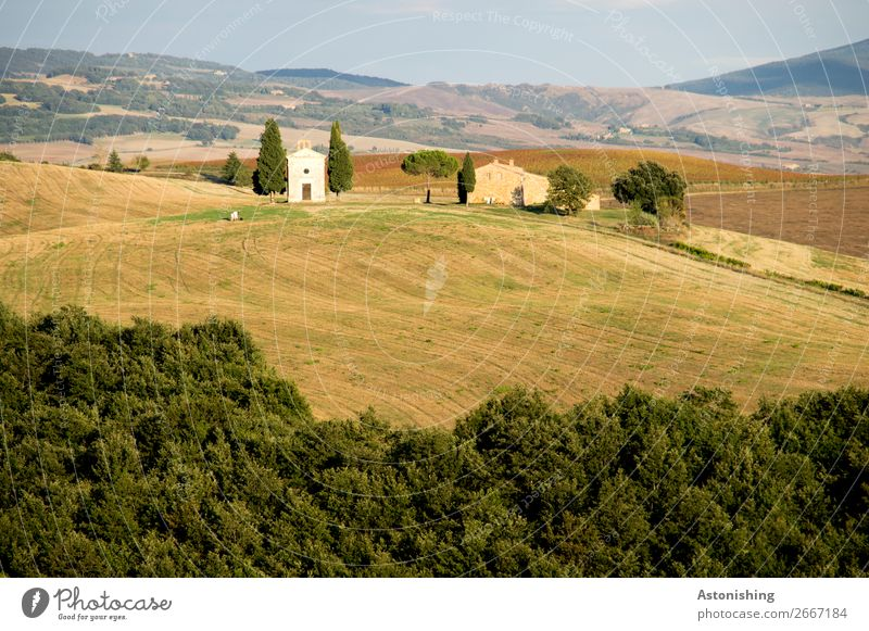 Kapelle in der Ferne I Umwelt Natur Landschaft Pflanze Himmel Horizont Sommer Baum Gras Wiese Feld Wald Hügel Siena Toskana Italien Haus Kirche Mauer Wand