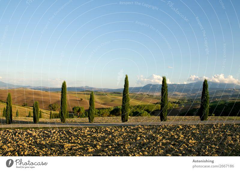 die Wächter der Landschaft Umwelt Natur Pflanze Erde Himmel Wolken Horizont Sommer Wetter Schönes Wetter Baum Zypresse Wiese Feld Wald Hügel Toskana Italien