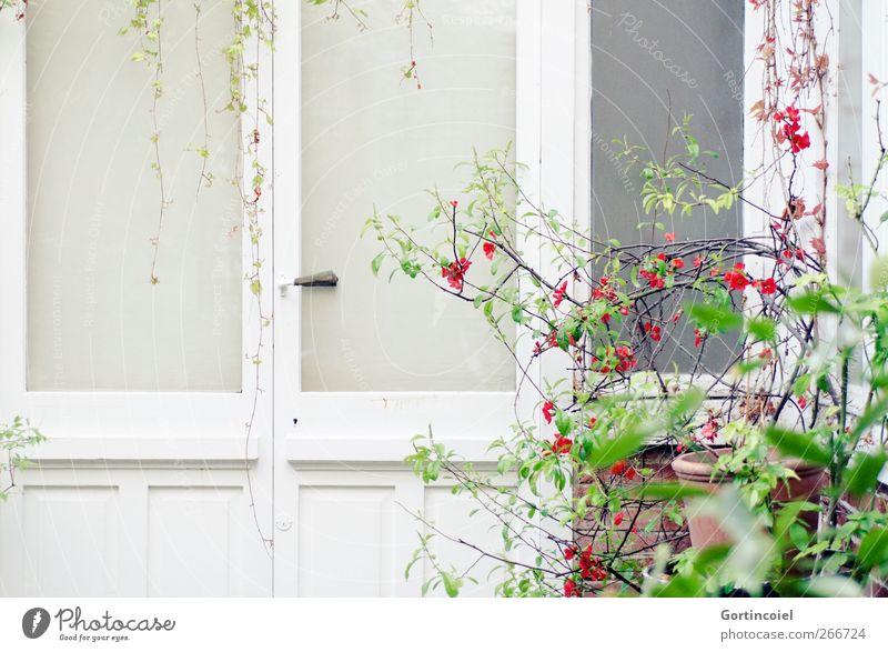 Paris Natur Stadt Pflanze Blatt Haus Fenster Architektur Blüte Frühling Gebäude hell Tür Sträucher Hinterhof Atelier