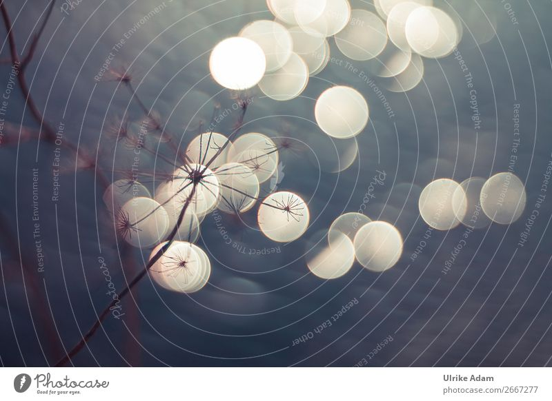 Winterlichter Natur Weihnachten & Advent Pflanze Leben Herbst Traurigkeit Feste & Feiern grau Design Zufriedenheit Dekoration & Verzierung leuchten glänzend