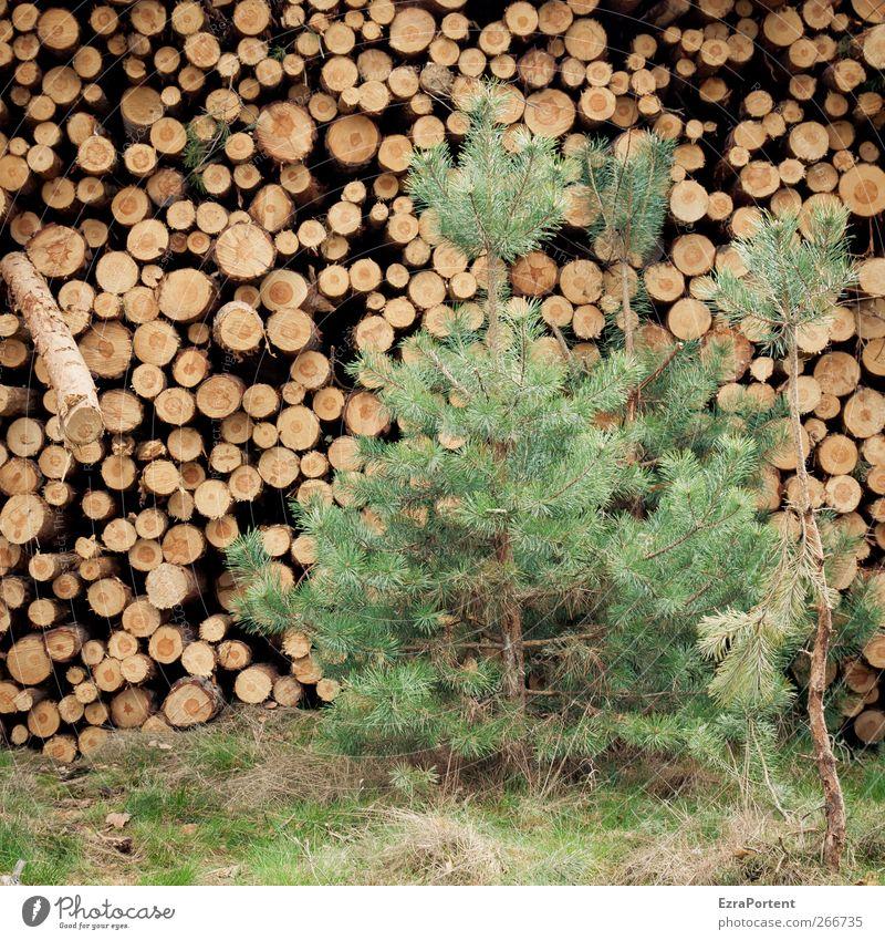 vorher/nachher Umwelt Natur Pflanze Baum Gras Nutzpflanze Wald Holz braun gelb grün Kiefer Baumstamm Abholzung vergleichen rund Quadrat Stapel fällen Farbfoto