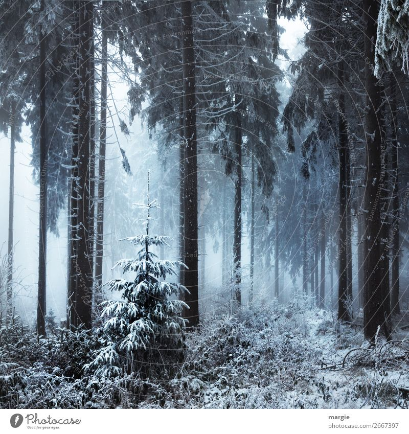 Der Letzte Weihnachtsbaum.Der Letzte Weihnachtsbaum Ein Lizenzfreies Stock Foto Von Photocase