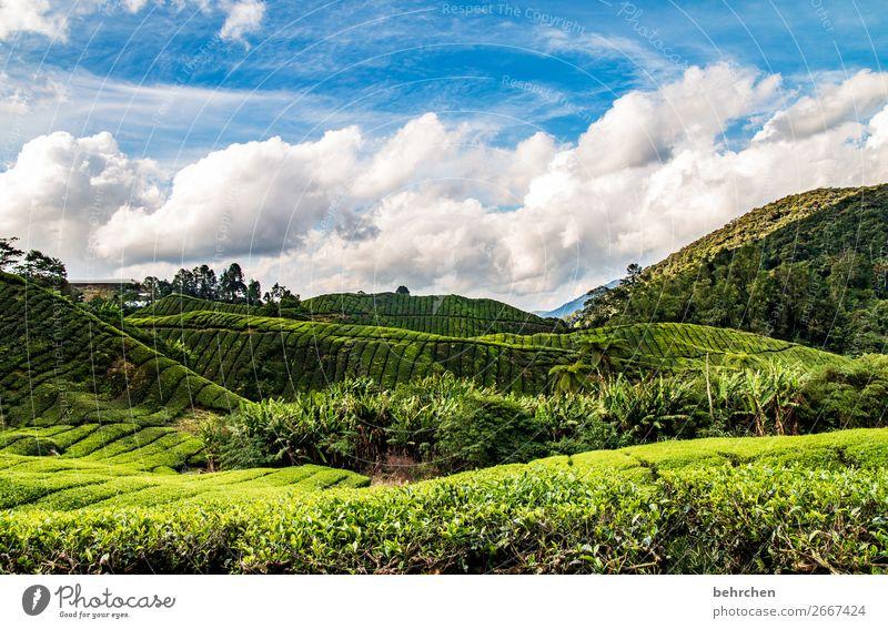 für teegenießer... Himmel Ferien & Urlaub & Reisen Natur Pflanze grün Landschaft Baum Wolken Blatt Ferne Berge u. Gebirge Tourismus außergewöhnlich Freiheit