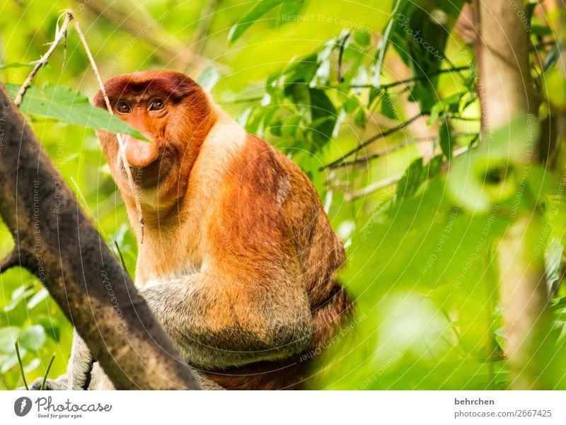 ein augenblick Ferien & Urlaub & Reisen Natur schön Baum Tier Blatt Ferne Tourismus außergewöhnlich Freiheit Ausflug Wildtier Abenteuer fantastisch Asien Fell