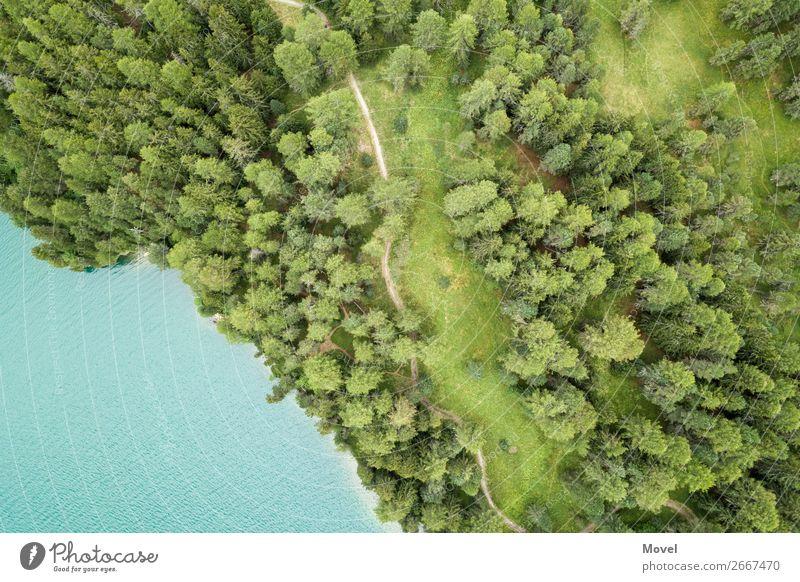 Natur Pflanze grün Wasser Landschaft Baum Wege & Pfade Wiese Küste See Schwimmen & Baden fliegen wandern Wetter Erde Luft