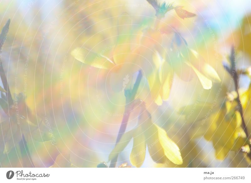 Fototapete Frühling II Himmel Natur blau grün Pflanze rot Sonne gelb Sträucher Schönes Wetter violett Forsithie