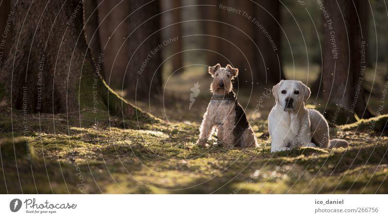im walde steht ein... Hund Natur grün Baum Tier Wald dunkel Umwelt Frühling liegen Freundschaft braun sitzen Tierpaar Lifestyle Haustier