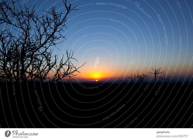 Himmel blau rot Sonne gelb Landschaft Sträucher Wüste stachelig Stachel negativ Klarer Himmel